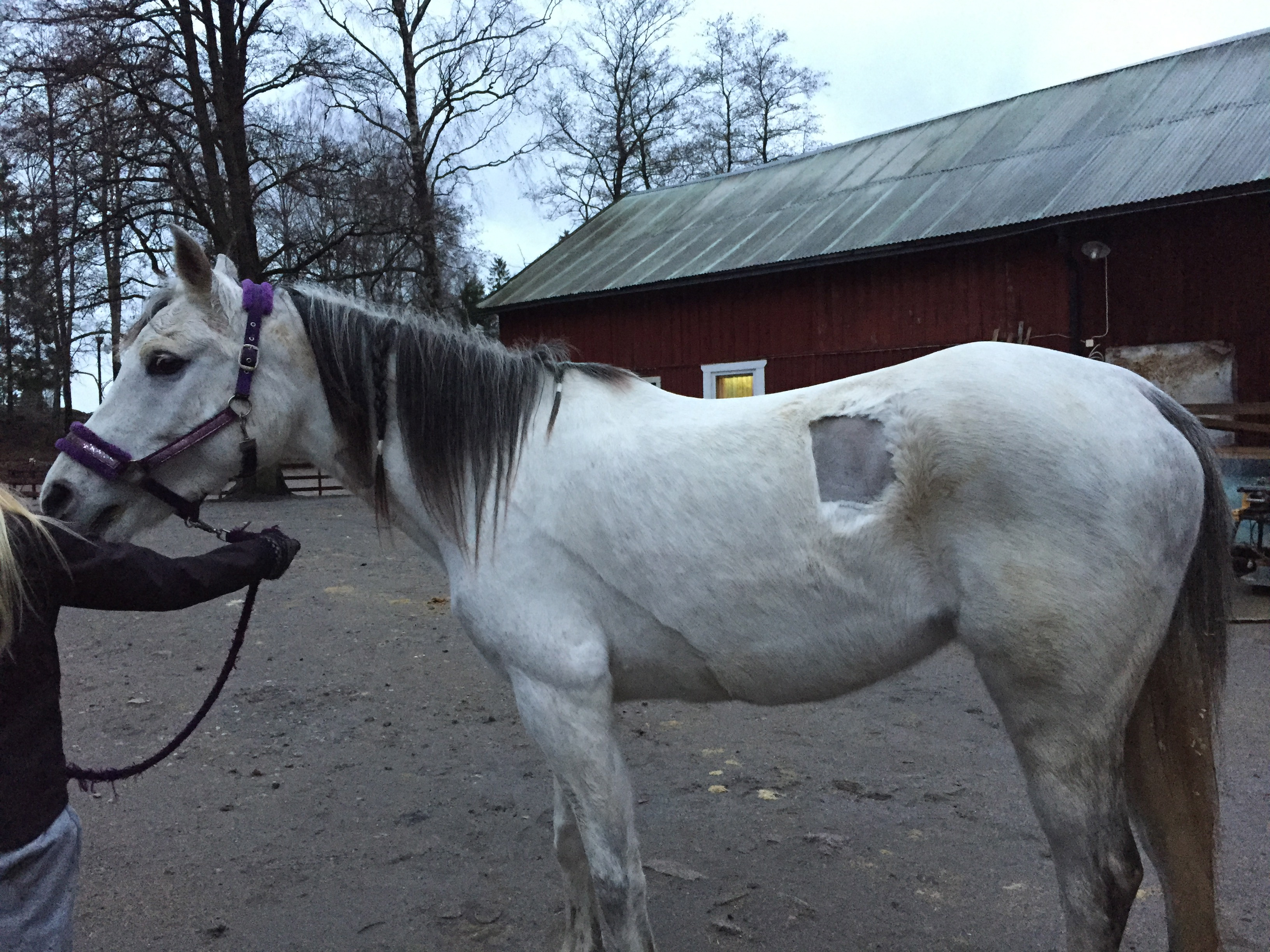 Nemah with her new fur cut